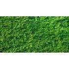 Фотосетка, 250 × 158 см, с фотопечатью, «Зелёная изгородь»