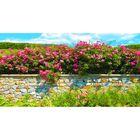 Фотосетка, 250 × 158 см, с фотопечатью, «Каменный забор с розами»