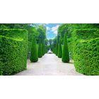 Фотосетка, 250 × 158 см, с фотопечатью, «Зелёный лабиринт»