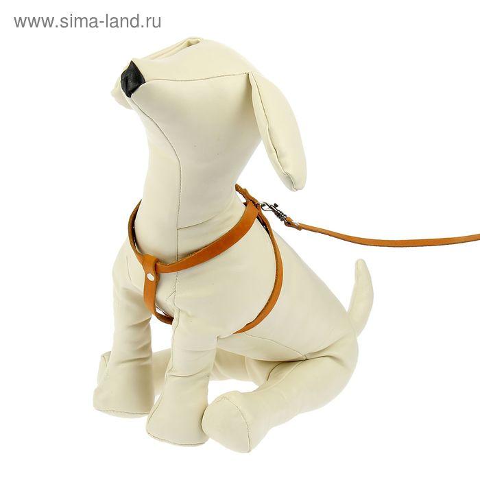 Комплект для кошек и мелких собак, шлейка 58 см и поводок 140 см