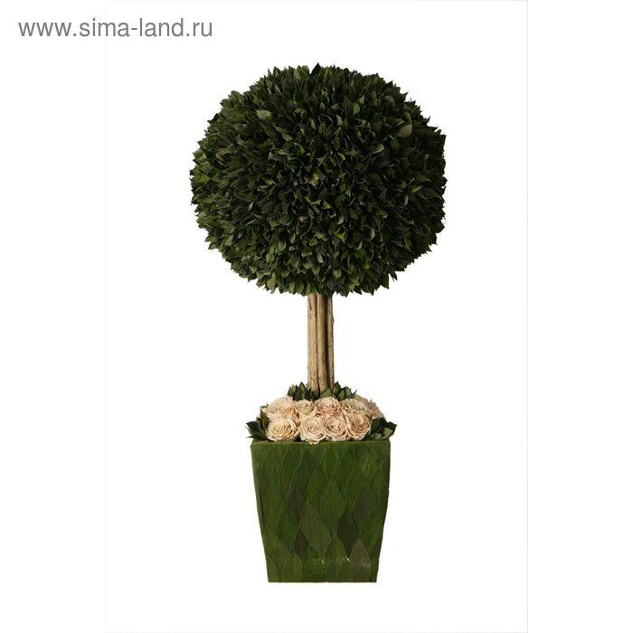 """Декоративная композиция """"Стриженое дерево в горшочке"""" с бежевыми розами, 36 х 36 х 70 см"""