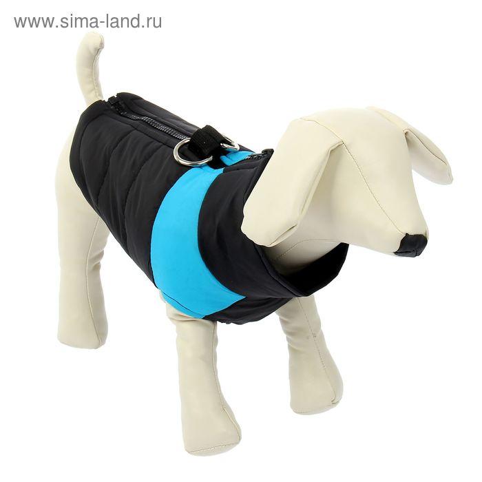 Куртка на синтепоне с креплениями для поводка, размер L (ОГ 50 см, ДС 34,5 см), черная с голубым