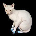 """Носки хлопковые нескользящие """"Белый медведь"""", размер L (3,5/5 * 8 см), набор 4 шт"""