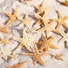 Набор натуральных морских звезд,  1,5 - 2,5 см, 20 шт - фото 699336