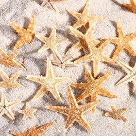 Набор натуральных морских звезд,  1,5 - 2,5 см, 20 шт