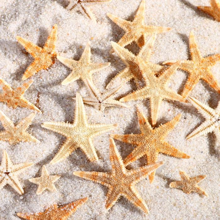 Набор натуральных морских звезд,  2,2 - 3,5 см, 20 шт