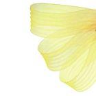 Регилин плоский, гофрированный, 44мм, 20±1м, цвет жёлтый