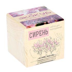 """ЭкоКуб """"Сирень венгерская"""""""