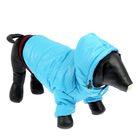 Куртка супертеплая на синтепоне с отстегивающимся капюшоном, размер М (ДС 31 см, ОГ 48 см), голубая