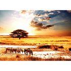 Фотообои самоклеящиеся «Сафари», 2 листа, 100 × 140 см