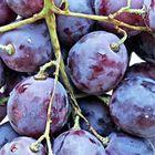 Декор 20х20см Толедо Виноград 14-00-55-140-5