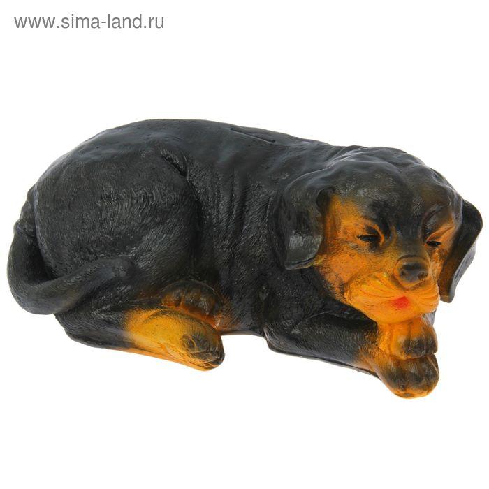 "Копилка ""Собака спящая"""