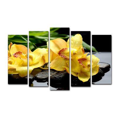 Жёлтые орхидеи