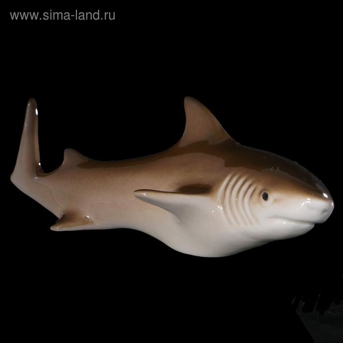 Сувенир «Акула», малая, 14×6×3 см