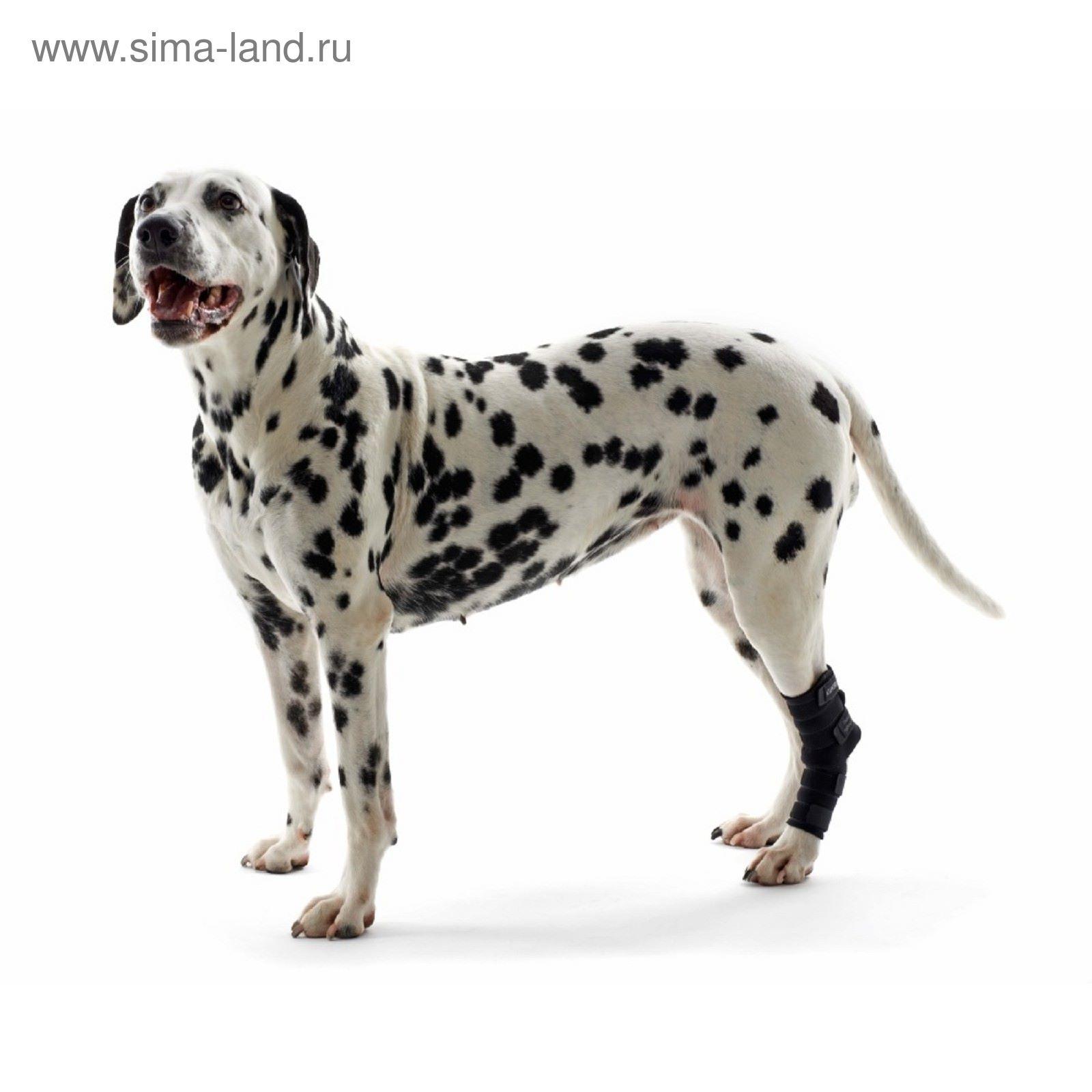 Протектор на скакательный сустав для собак ревматоидный артрит коленного сустава фото