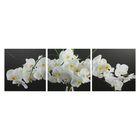 """Модульная картина на подрамнике """"Белое соцветие"""", 3 шт. 50×50 см, 50×150 см"""