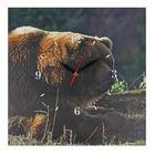 "Часы настенные, серия: Животный мир, на холсте ""Бурый медведь"", 40х40 см"