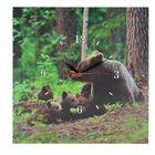 """Часы настенные, серия: Животный мир, на холсте """"Медвежья семейка"""", 40х40 см"""