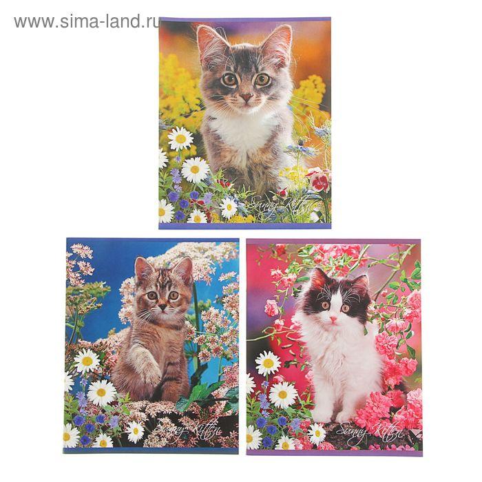 Тетрадь 24 листа клетка Sunny kitten, картонная обложка, МИКС