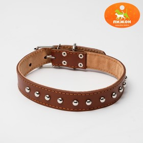 The collar is double-layered leather riveted 60 x 3 cm mix colors