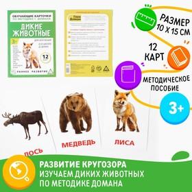 Обучающие карточки по методике Г. Домана «Дикие животные», 12 карт, А6