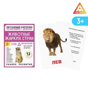 Обучающие карточки по методике Г. Домана «Животные жарких стран», 12 карт, А6