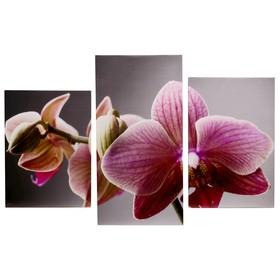 """Модульная картина на подрамнике """"Величественная орхидея"""", 99×65 см"""