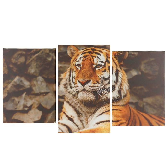 "Модульная картина на подрамнике ""Тигр"", 2 шт. — 31×44, 1 — 31×52, 70×105 см"