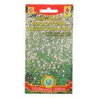 """Семена цветов Гипсофила """"Пушистый снег"""" махровая, белая , Мн., 0,1 г"""