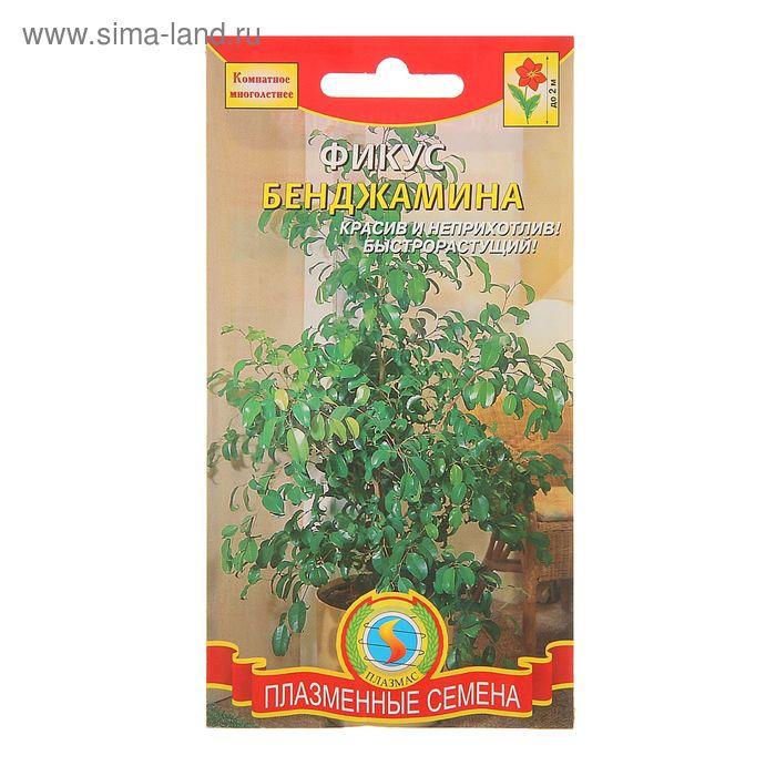"""Семена комнатных растений Фикус """"Бенджамина"""", Мн., 3 шт"""