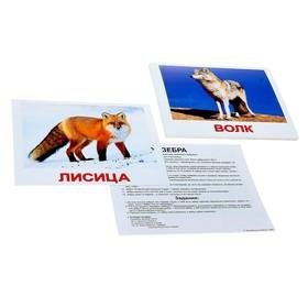 Обучающие карточки «Дикие животные»