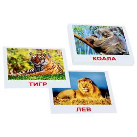 Набор карточек «Мини-20. Дикие животные»
