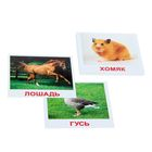 Набор карточек «Мини-20. Домашние животные»