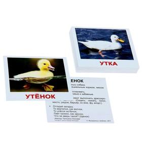 Набор карточек «Мини-40. Домашние животные»
