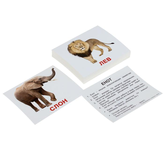 Набор карточек «Мини-40. Дикие животные»