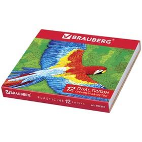 Пластилин 12 цветов 240 г, BRAUBERG высшее качество, со стеком, высшее качество, картонная упаковка