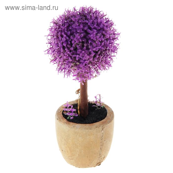 """Бонсай """"Фиолетовый трилистник"""" шар"""