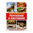 Мини-энциклопедия «Рептилии и амфибии», 20 страниц