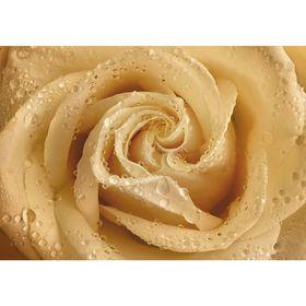 Фотообои Утренняя роза ЛЮКС 1,94х1,36 м (из 4 листов) Ош