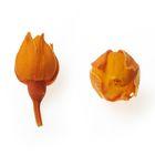 Роза, малый бутон, 2 х 2 х 1.5 см, оранжевый