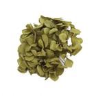 Ветка гортензии, 12.5 х 12.5 х 11 см, зеленая