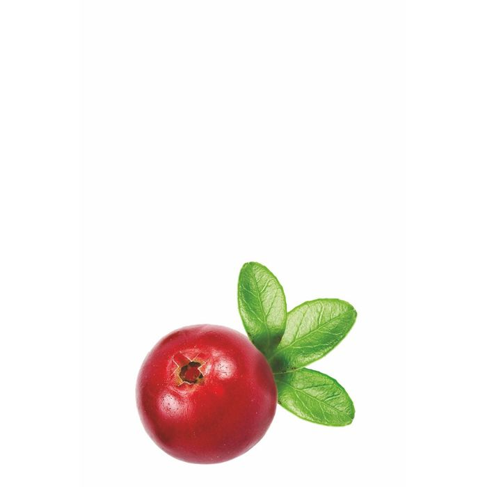 картинки ягодки брусничка данный вид клея