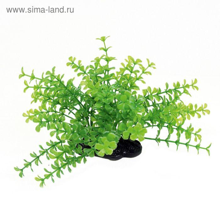 Комп. из искусств. растений ArtUniq Proserpinaca green 10-12 - Прозерпинака зеленая, 10-12 см   2148