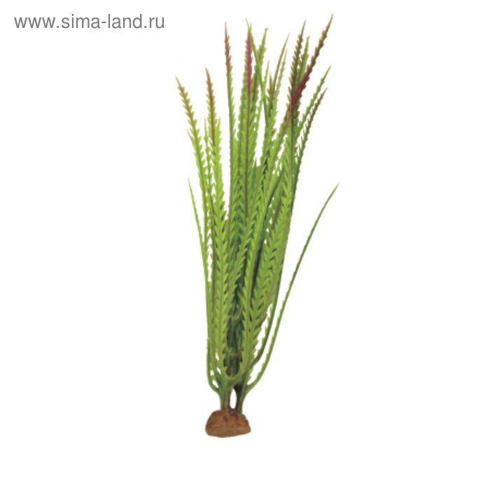 """Композиция из искусств. растений """"Гигрофила перистонадрезанная"""", 6x6x19 см"""