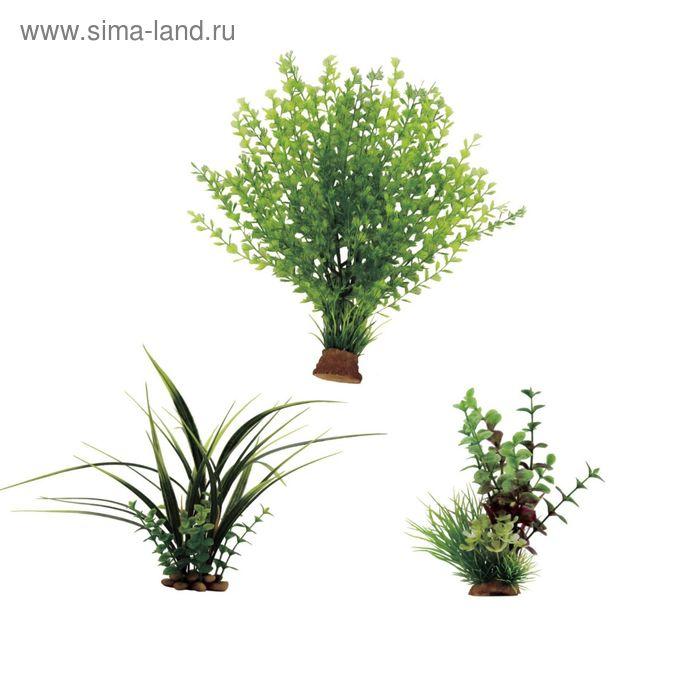 """Набор искусств. растений """"Кариота, Акорус, Лизимахия"""", 15-35 см, 3 шт"""
