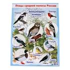"Плакат ""Зимующие птицы"" А2"