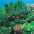 Фон для аквариума FA-1002, 50 см, рулон 25 м