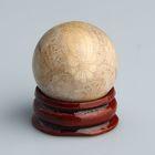 Шар из камня. Окаменелый коралл от 29мм/55г: подставка, коробка