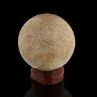 Шар из камня. Окаменелый коралл от 48мм/200г: подставка, коробка