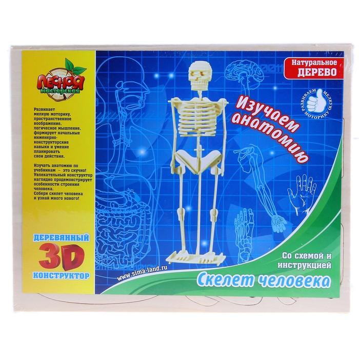 """Конструктор деревянный 3D """"Скелет человека"""""""